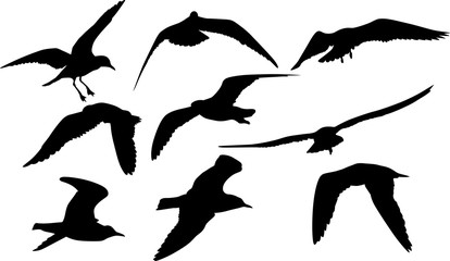 collection of nine gull black isolated silhouettes
