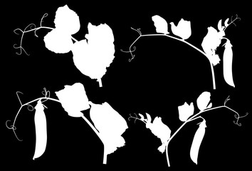 four pea stem silhouettes isolated on black