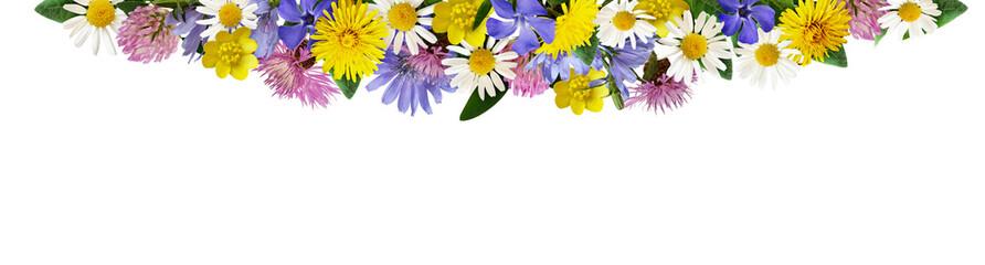Wild flowers in a border arrangement