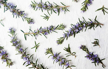 Rosemary branches in blossom on white background