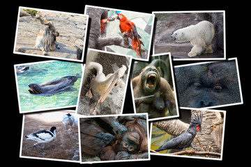 Different animals collage on postcard, all photos are in white frames and situated on the black background.