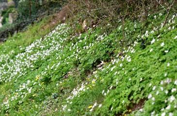 talus au printemps