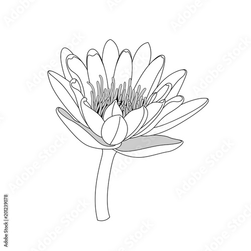 simple line lotus flower. black and white isolated. Hand draw lines ...