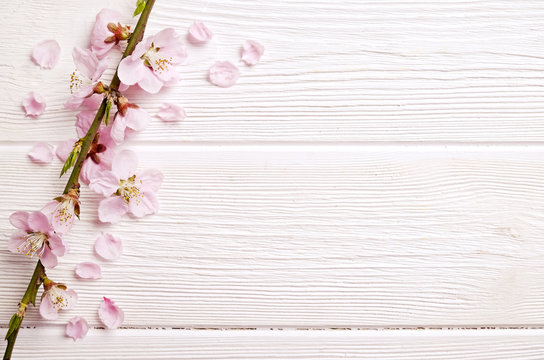 Single spring flowering branch with a lot of pink blossoms on white wooden background. Rustic composition, many spring tree flowers on vintage wood textured table. Close up, copy text space, top view.