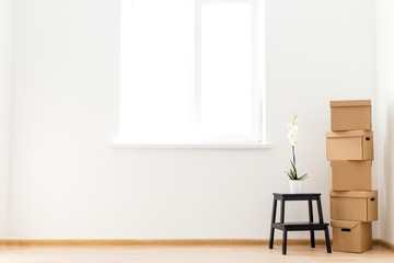 Cardboard boxes with a flower standing on a ladder stand in an empty room against a window