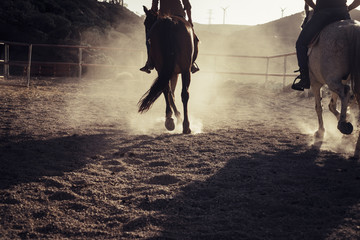 horses with cowboy ride in the backlight making dust