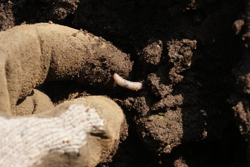 An earthworm on a soil and hand of man
