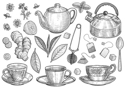 Collection of tea illustration, drawing, engraving, ink, line art, vector