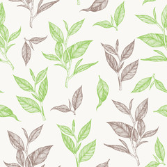 Tea seamless pattern. Hand drawn tea leaf vector illustration. Vintage packaging design. Engraved style.