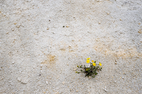 yellow flower on the sand
