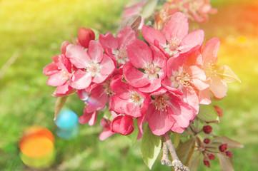 Apple tree flowers Spring Vintage toned light leaks