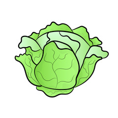 Vector green liner cabbage.