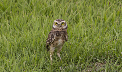 owl worried about puppies
