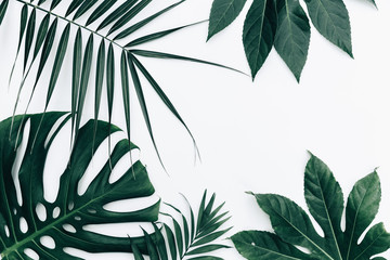 Tropical trendy background. Leaves over white background