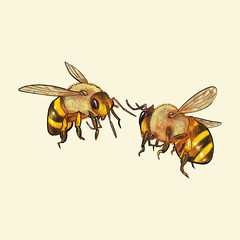 Hand drawn bee isolated on yellow background