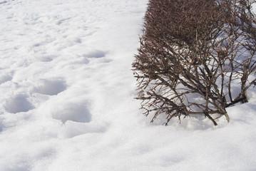 冬 木 雪 素材