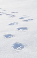 冬 雪 足跡 素材
