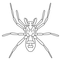 Spider icon. Simple element illustration. Spider symbol design from Insect collection set. Can be used in web and mobile