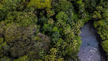 rainforest meets the ocean
