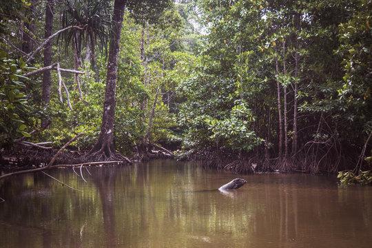 A flooded, coastal mangrove