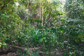 trail in the bamboo thickets tropical jungles