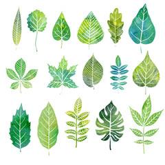 watercolor set of tree leaves
