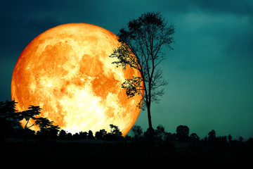 super full blood moon back silhouette branch tree dark forest blur sky