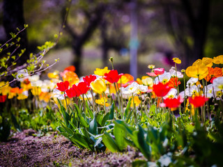 Unforgettable Spring Flowers Series
