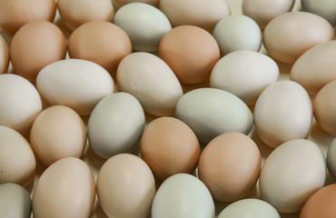 Organic free range chicken eggs in original pastel colours
