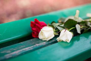 Fototapeta Jedna czerwona róża i dwie kremowe róże na ławce obraz