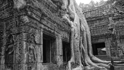 Ta Phrom Temple - The Tree Roots Temple in Angkor Wat