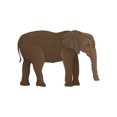 Elephant wild animal, side view vector Illustration on a white background