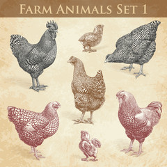 Vector Farm Animals engraving set1. Chickens and Roosters