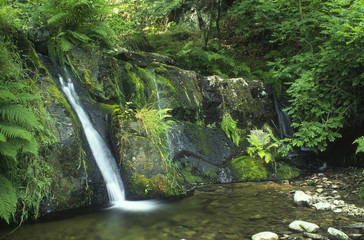 Wales, Powys, near Llyn Brianne, small waterfall into pool surrounded by ferns