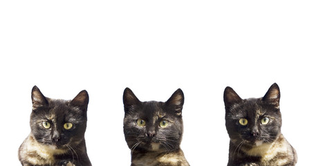 three cats on a white background