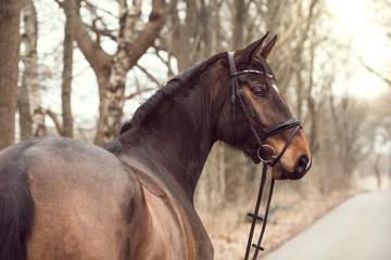 Portrait braunes Pferd