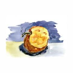 Pumpkin. Hand drawn watercolor painting.