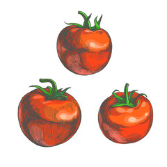 Vector color set of vegetables isolated on white. Hand drawn illustration of red tomatoes in engraving style.