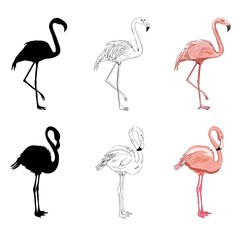 Hand drawing flamingos. Vector illustration