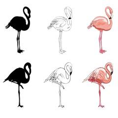 Hand drawing flamingos. Vector illustration