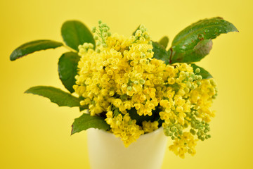 Yellow spring shrub stock images. Yellow bouquet on yellow background. Spring floral decoration. Spring background concept. Yellow spring bouquet
