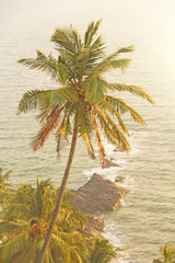 Beautiful palm tree on the background of the sea and sun. A palm tree on the background of a sunset. Tropical and exotic landscape. Wallpapers with palm trees. Tinted photo