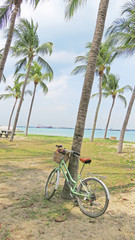 A bicycle on the seashore, surrounded by tall fingers. East Coas