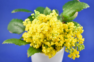 Yellow spring bouquet stock images. Yellow spring shrub. Yellow bouquet on blue background. Spring floral decoration. Spring background concept