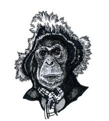 A monkey in a hat.