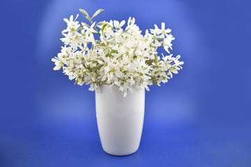 White spring flower stock images. White spring bouquet. White bouquet on blue background. Spring floral decoration. Spring background concept