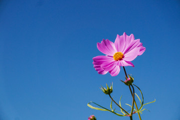 Pink flowers are blooming in nature with bright sky.