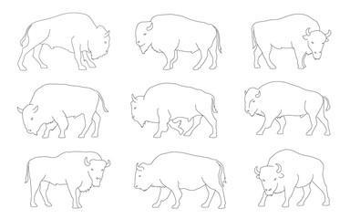 bison line