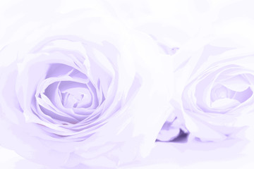 Soft full blown ultraviolet roses as a neutral background. Close up.