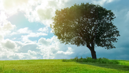 Beautiful view of green tree growing in field under cloudy sky, weather forecast